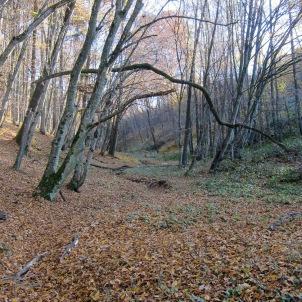 park_autumn2_web